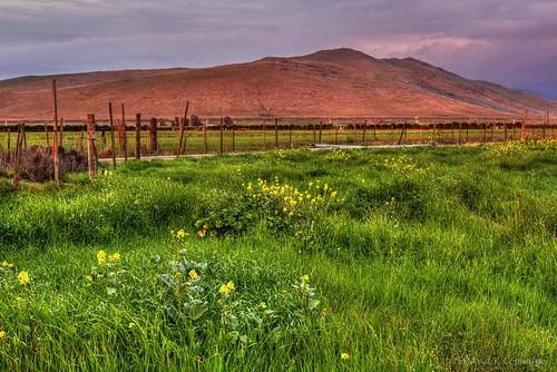 ca california yettem farm field mustard stokesmtn fence psa104 chiefbwana