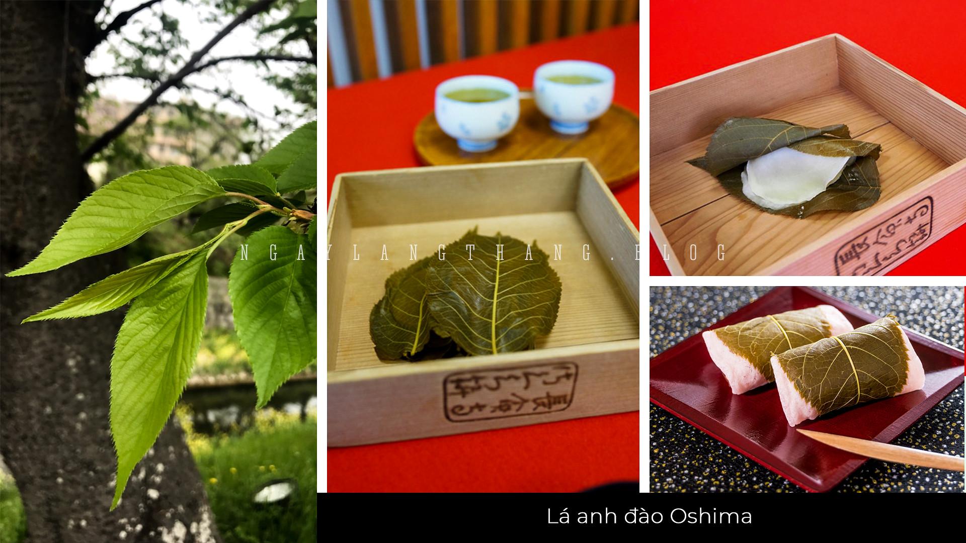 hoa mơ, hoa đào, hoa anh đào-lá Oshima