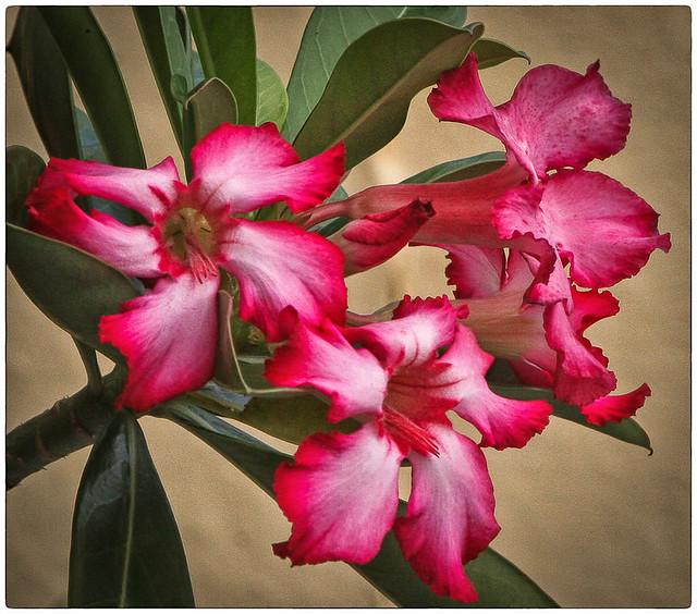 My Wife Flowers