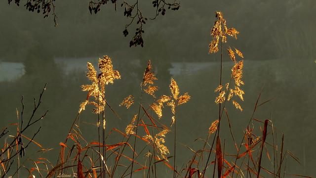 ombre et lumière sur le lac ...