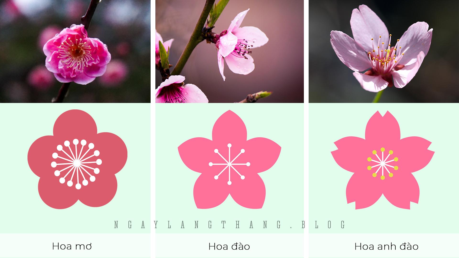 hoa mơ, hoa đào, hoa anh đào