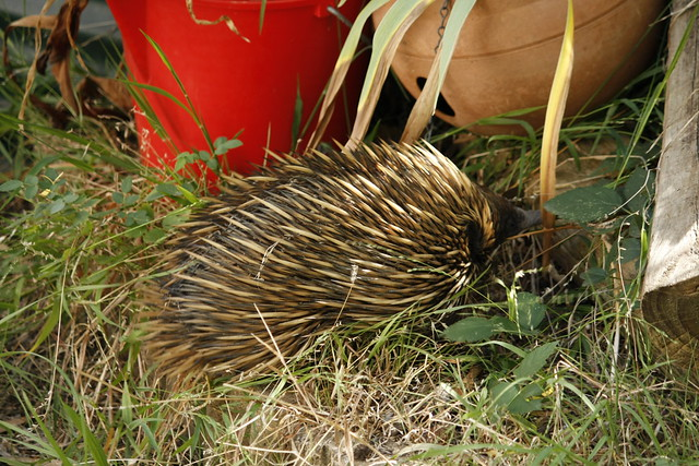 OMG! We have an echidna!