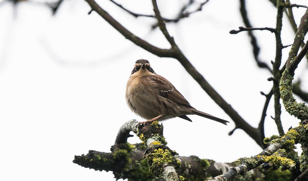Bird 4   (1 of 1)