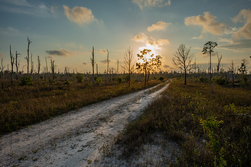 bonitasprings florida wildlifepreserve nature outdoors outside sunrise sky trees roads dirtroad backroads