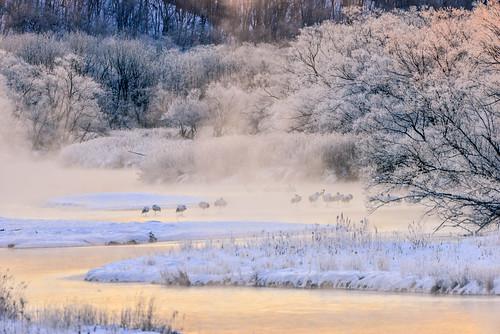 japan hokkaido kushiro redcrownedcrane tsurui shimosetsuri winter snow bird roots lighting fog sunrise dawn river sunlight 日本 北海道 釧路 音羽橋 晨曦 煙波 丹頂鶴 冬季 雪景 つるいむら 雪裡川