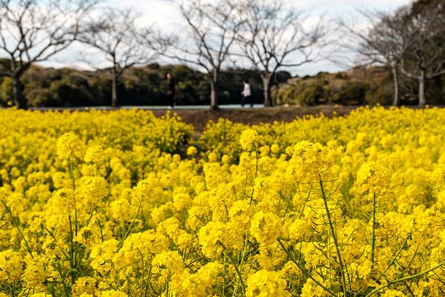 常盤湖周遊園路ーLake Tokiwa Amusement Park Road
