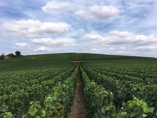 Promenade en vignes