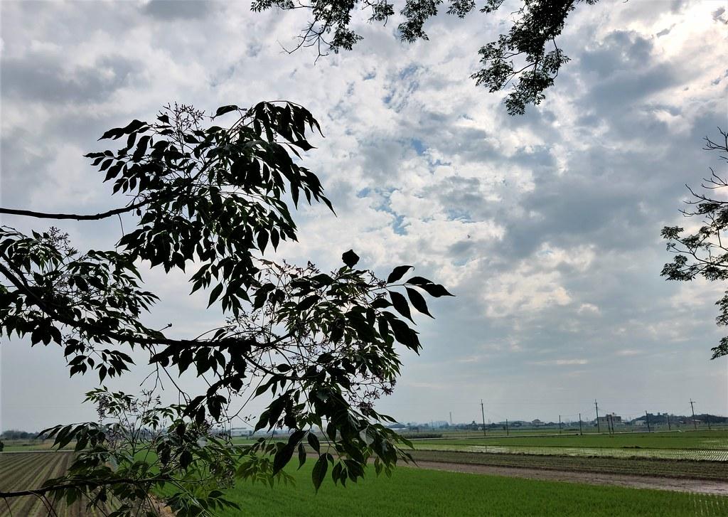 新港溪北社區 (37)