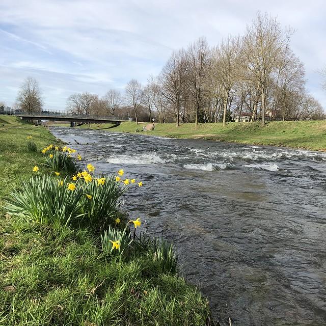 Walk to the Dreisam river