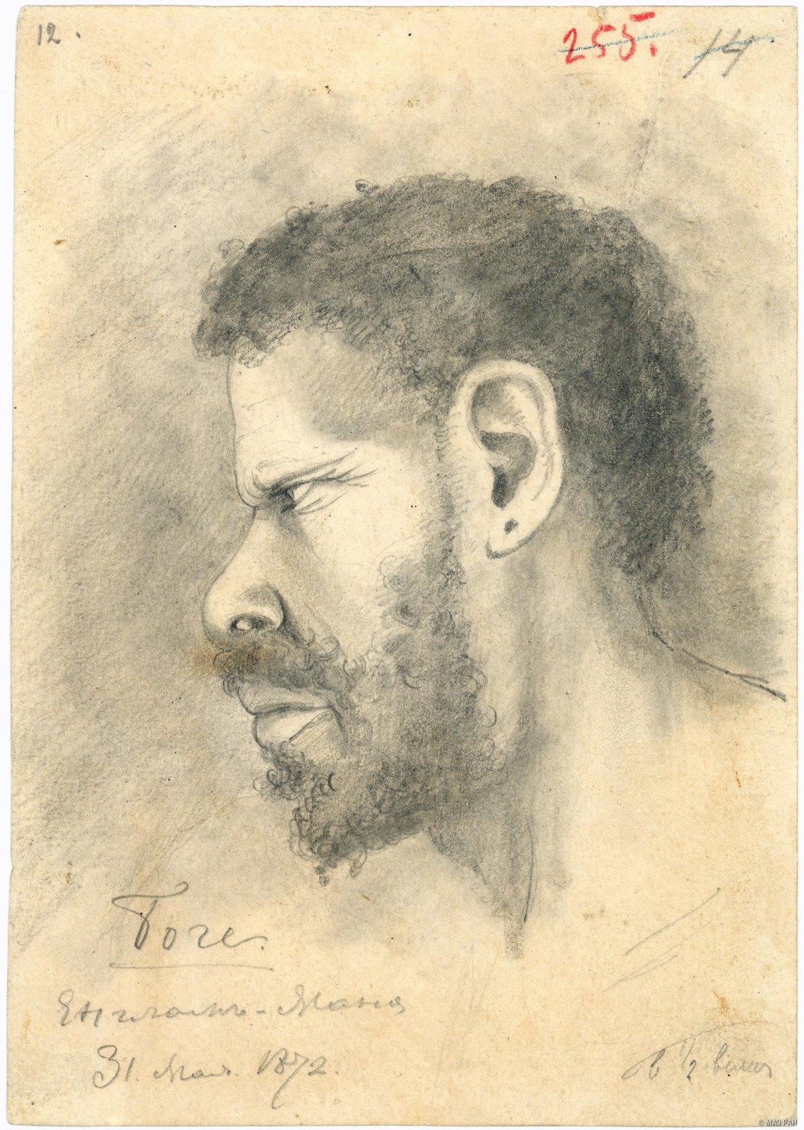 1872. Портрет папуаса Боге. Папуасы. Папуа - Новая Гвинея. 31 мая