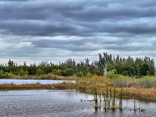 Great Egret lakescape COREL 20200308
