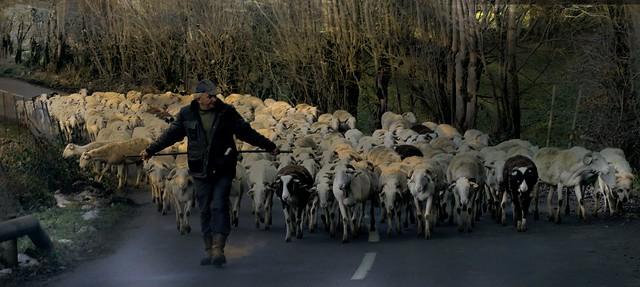 Oô (Haute-Garonne, Occitanie, Fr) – Le berger, le troupeau