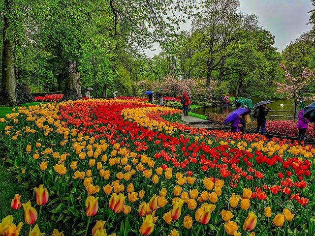Springtime is always colorful in Keukenhof garden park.
