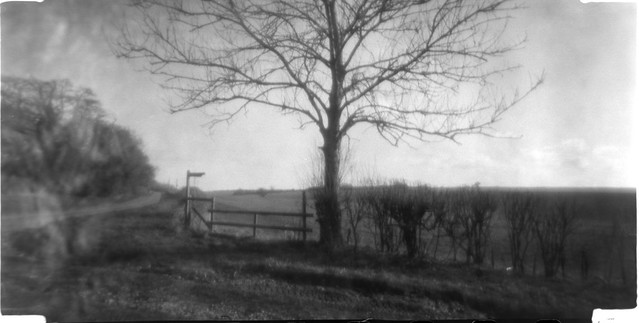 Pinhole Tree Near Winchester