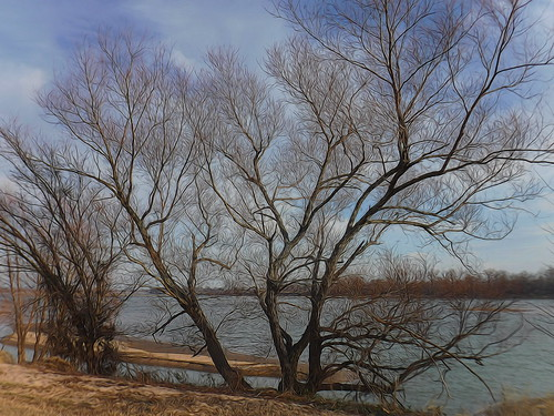 Arkansas River Trees edit