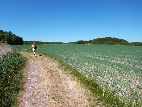 A 6 km petroglyph walk amongst farmer's fields in Tanum, Sweden