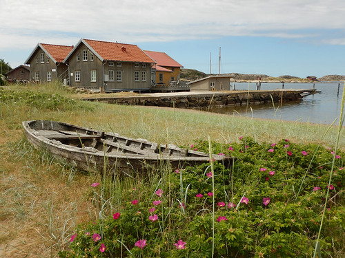 Boat tucked in amongst wild roses at Gronemad is a small town along the Bohuslän Coast of Sweden