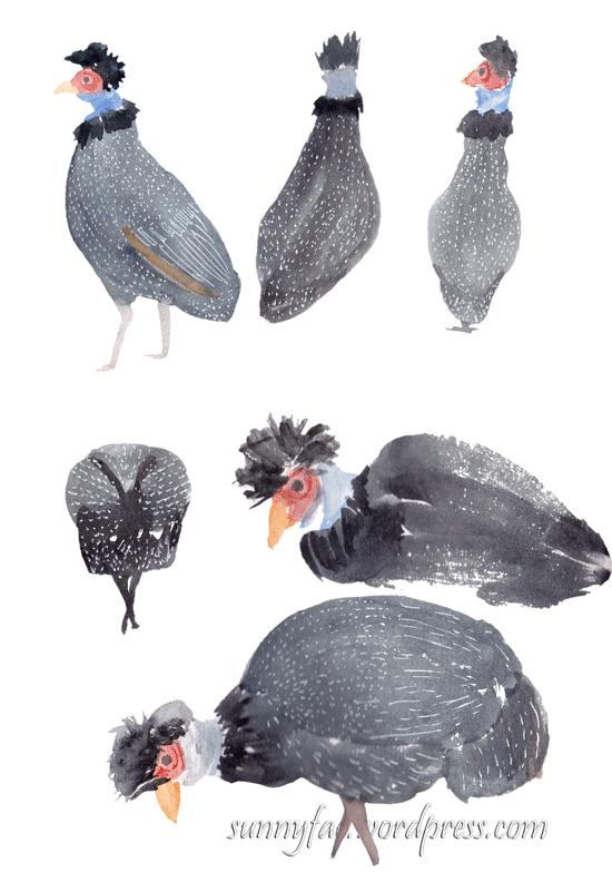 crested guinea fowl quick studies