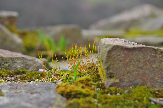 Moos Wald