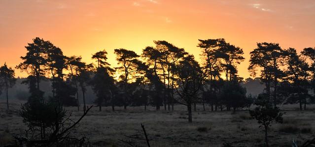 Sunrise Deelerwoud