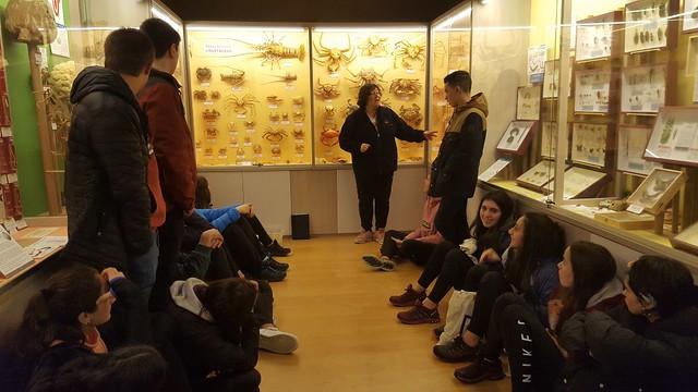 Hontza museoan