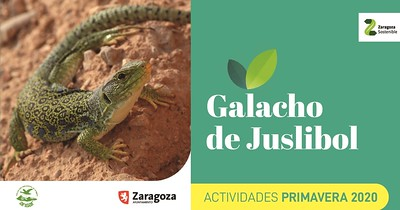 https://www.zaragoza.es/cont/paginas/actividades/documento/galacho2020.pdf