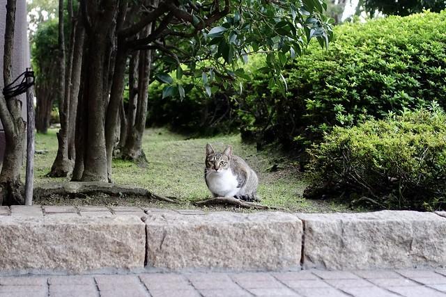 Today's Cat@2020ー03ー09