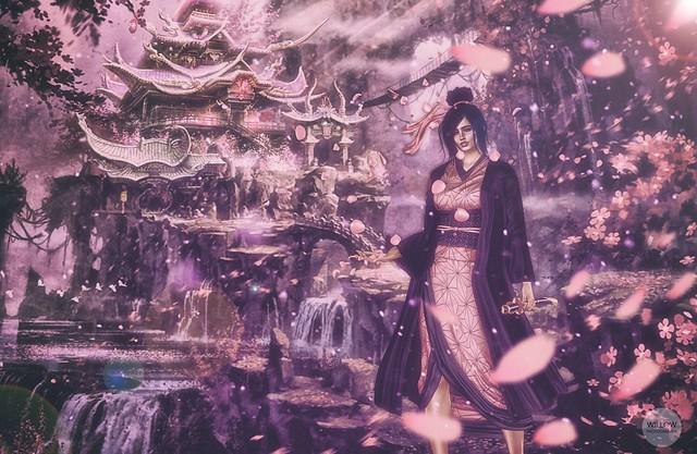 [ Cherry blossom ]