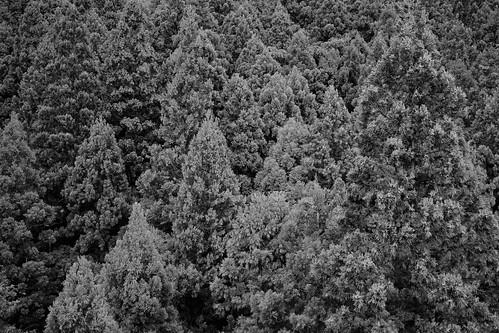 写真展「X-Pro2 ✗ X-Pro2」二人展 Forest set