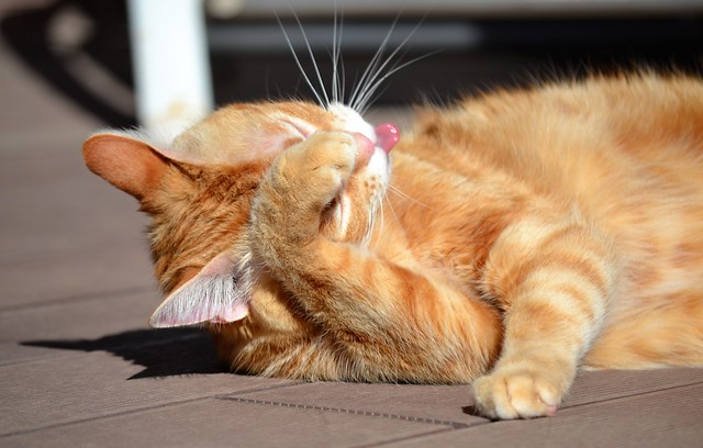 Cleaning and sunbathing session (2)