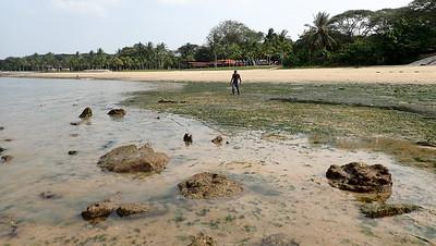 Pasir Ris intertidal