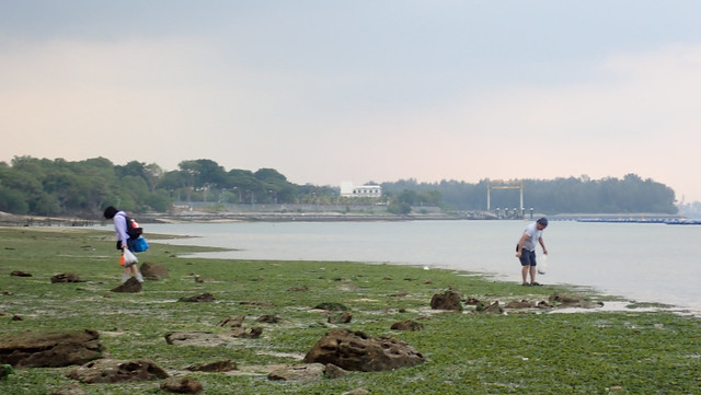People collecting on the shore, Pasir Ris
