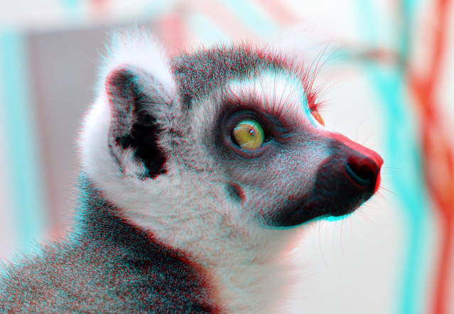Maki Blijdorp Zoo Rotterdam 3D
