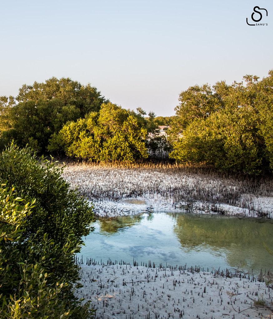 Al Jubail Mangrove Park