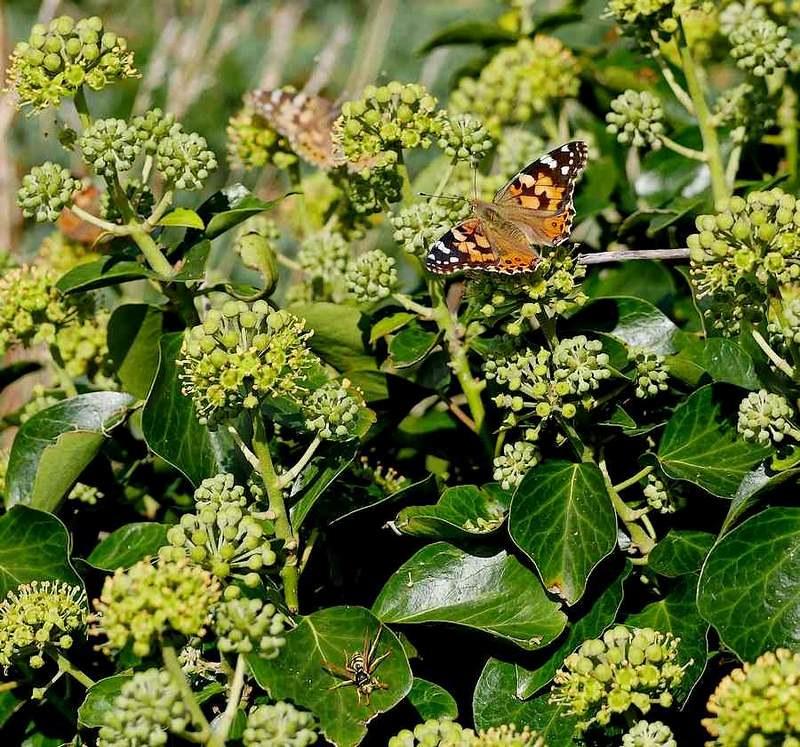 Papillon et ....... 49641454256_81a0297178_c