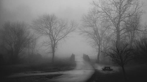 morning landscape lakeelkhorn columbia fog bw blackandwhite trees bridge maryland unitedstatesofamerica