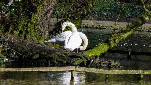 Nest building, boating lake island