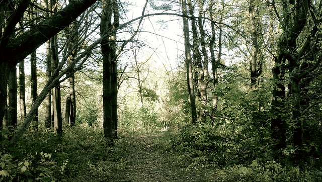 A Path in the Wood