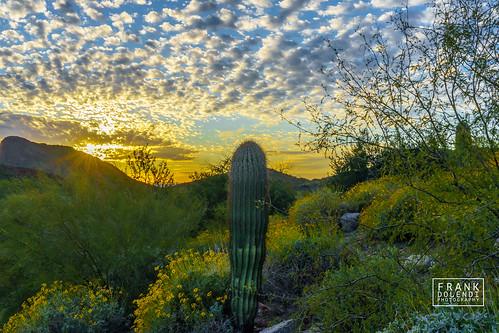 arizona fountainhills desert mountains sunset sunsets landscapes landscapephotography sony a72 a7ii 35mm zeiss nature parks landscape sonnar3528za cacti cactus deserts