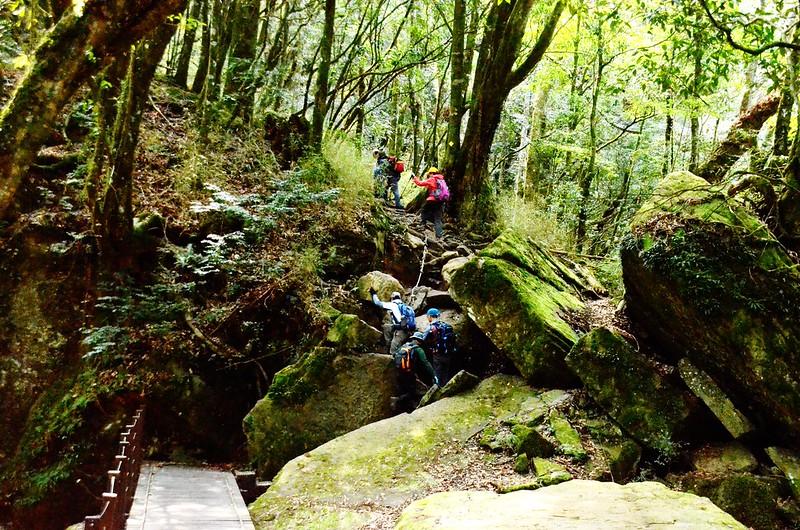 木橋景觀石區陡攀路段