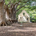 Beautiful camphor trees planted in the 1600s/1700s