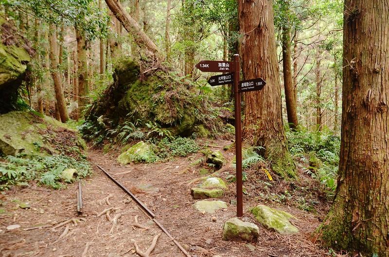 大坪登山口、鹿場登山口岔路