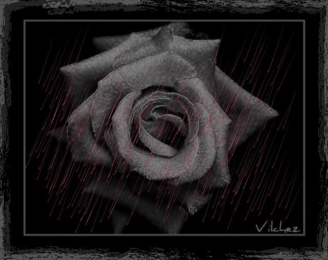 Lluvia Roja,,,,,,, Red rain
