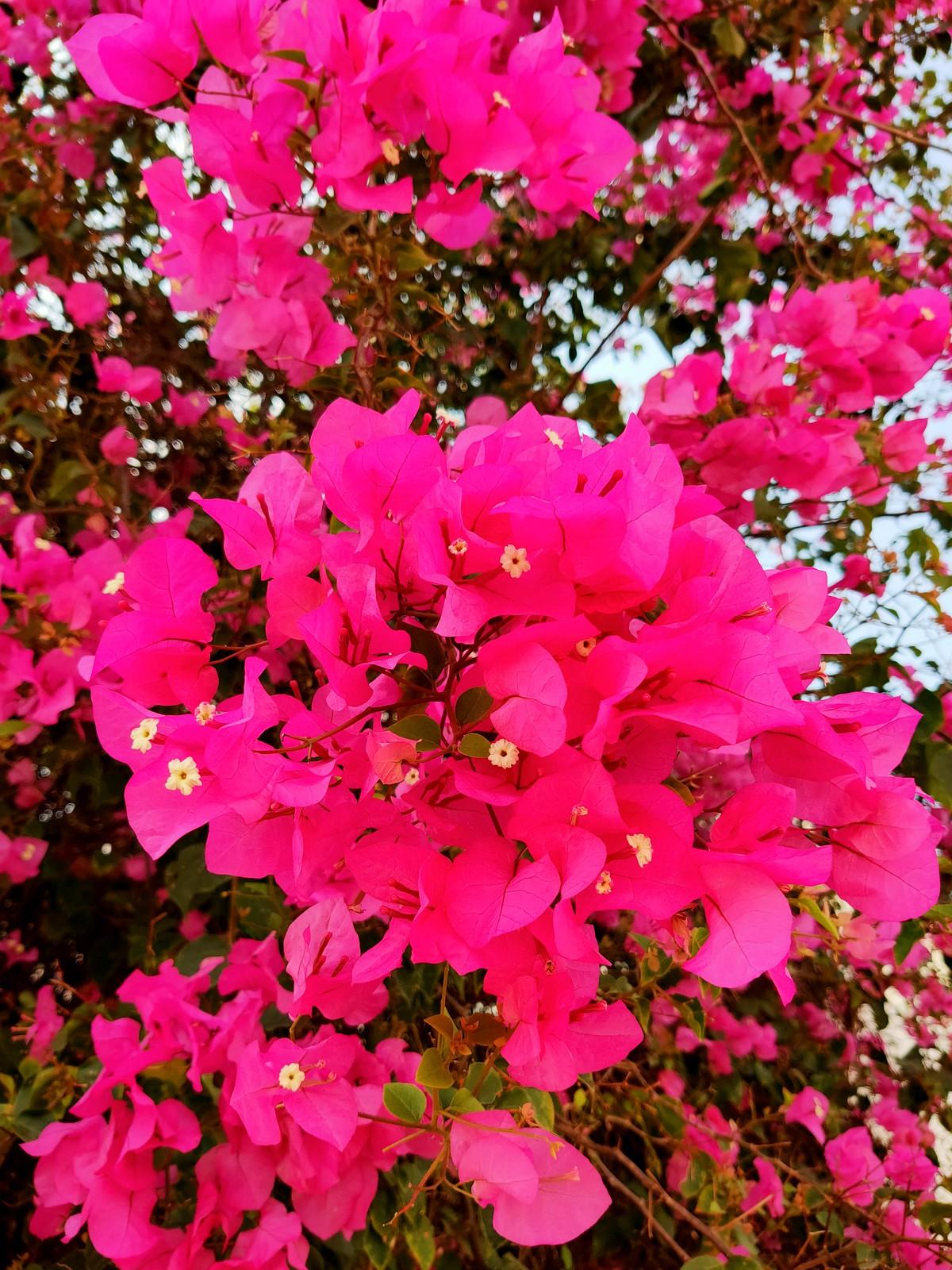 安平季節美景 (5)