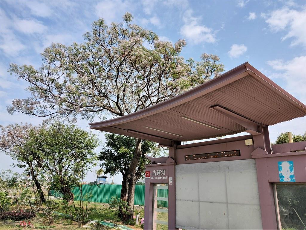安平季節美景 (10)