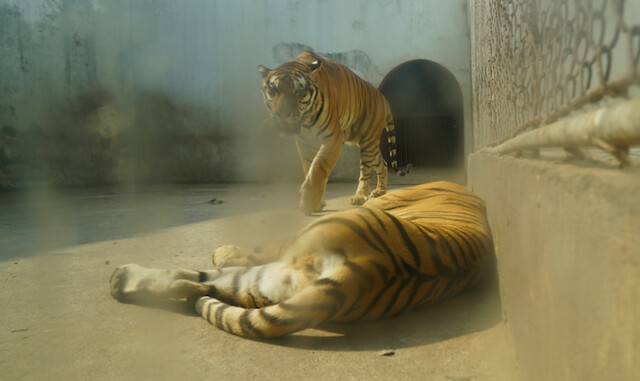 2017 CCA Investigation into Nanchang Zoo