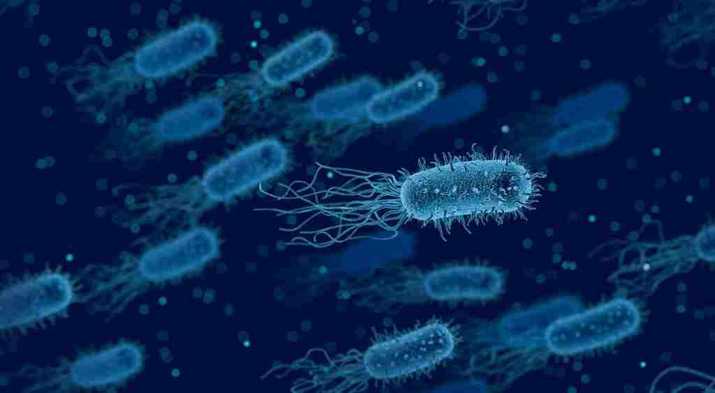 les-bactéries-se-sacrifient-contre-une-attaque-pour-sauver-leus-colonies