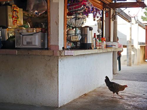 A chicken for desayuno (breakfast)? At the market in Marquelia, Mexico
