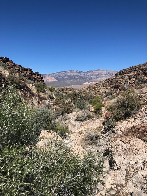 Nevada - Fossil Ridge canyon