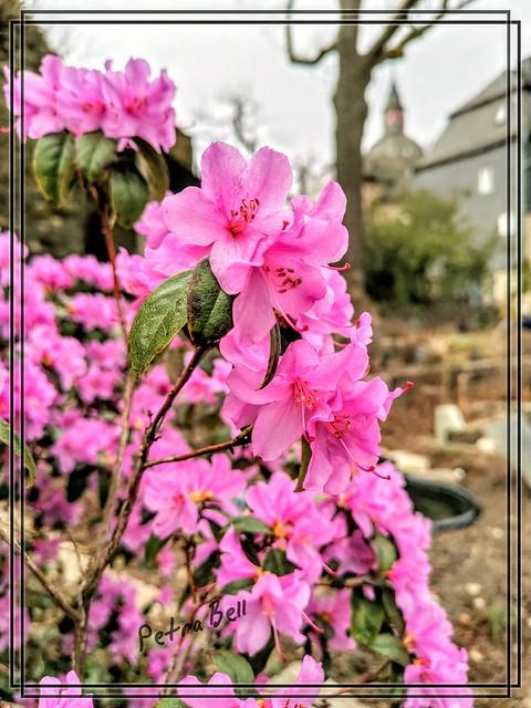 Flower dream in the castle garden 🏰 🌺🌺🌺